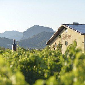 Visita a Bodega con cata premium - Mallorca