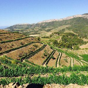 Visita guiada a bodega, paseo por viñas y cata - Tarragona