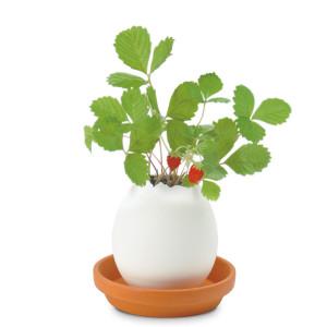 "Maceta & Planta ""cáscara de huevo"" – empolla tus plantas"